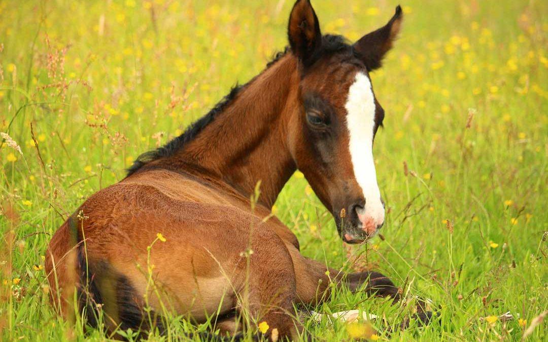 Race Horse Development Fund (RHDF) Preserved